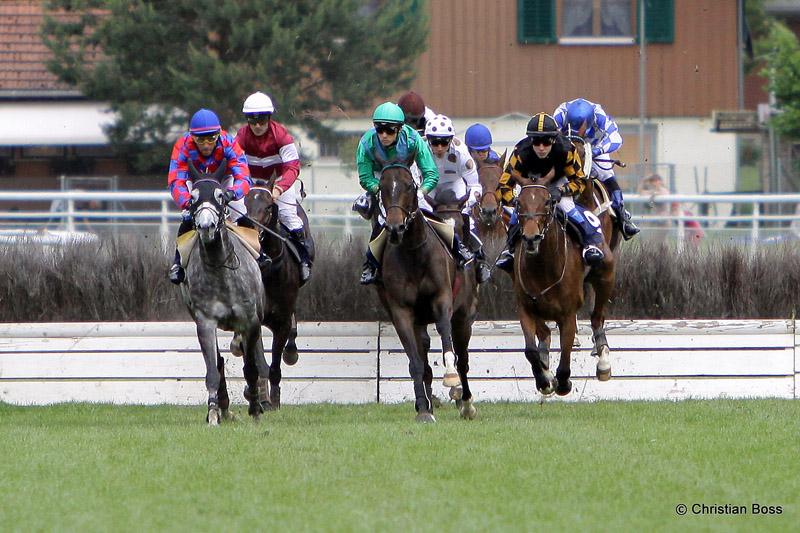 Pferdesport IMG_0165