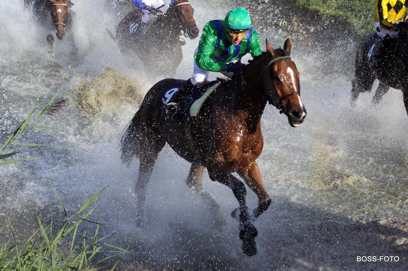 Pferdesport IMG_4219