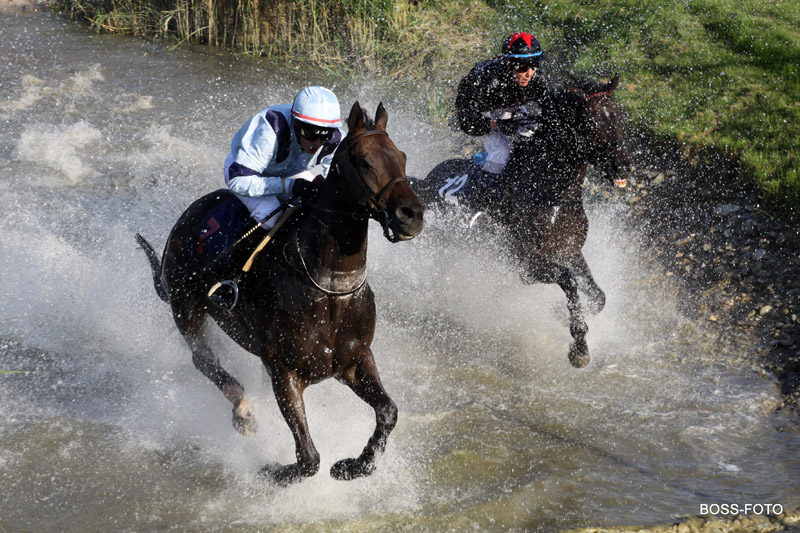 Pferdesport IMG_4230